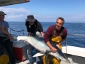 Winning shark